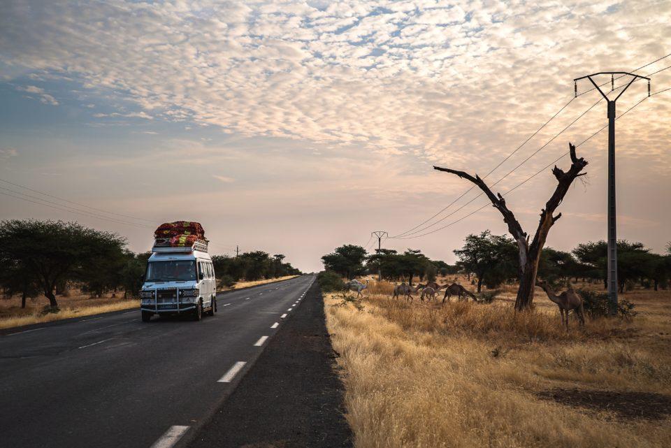 Corona safari   Unreal sight, kind of like a safari with a bus and masked people driving by ... #corona-kindness